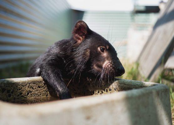 A black mouse